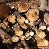 キャンプ用薪ストーブで一泊に使う薪の量はどれくらいか?